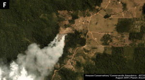 Zoom F. Fire that seems to be expanding plantation into forest in Amazonas state. Data- Planet.