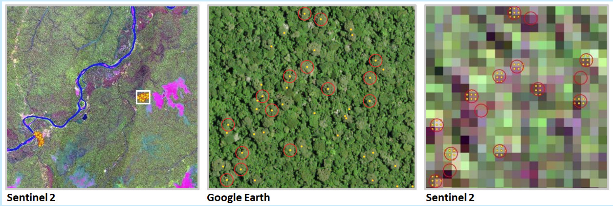 Images taken from satellite are the first step in our model to identify Brazil nuts without humans having to do the tradition manual census on foot
