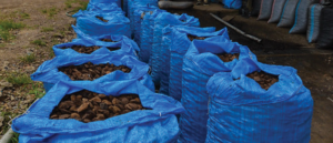 bags of brazil nuts