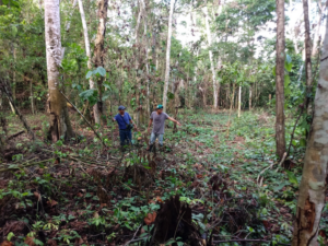 Our team preparing the Rosewood restoration area