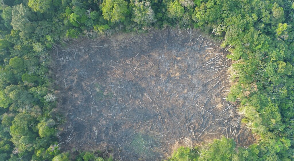 """Case D. Deforestation in the """"Sara Hurtado Orozco B"""" Chestnut Forest Concession. Source: ACCA."""