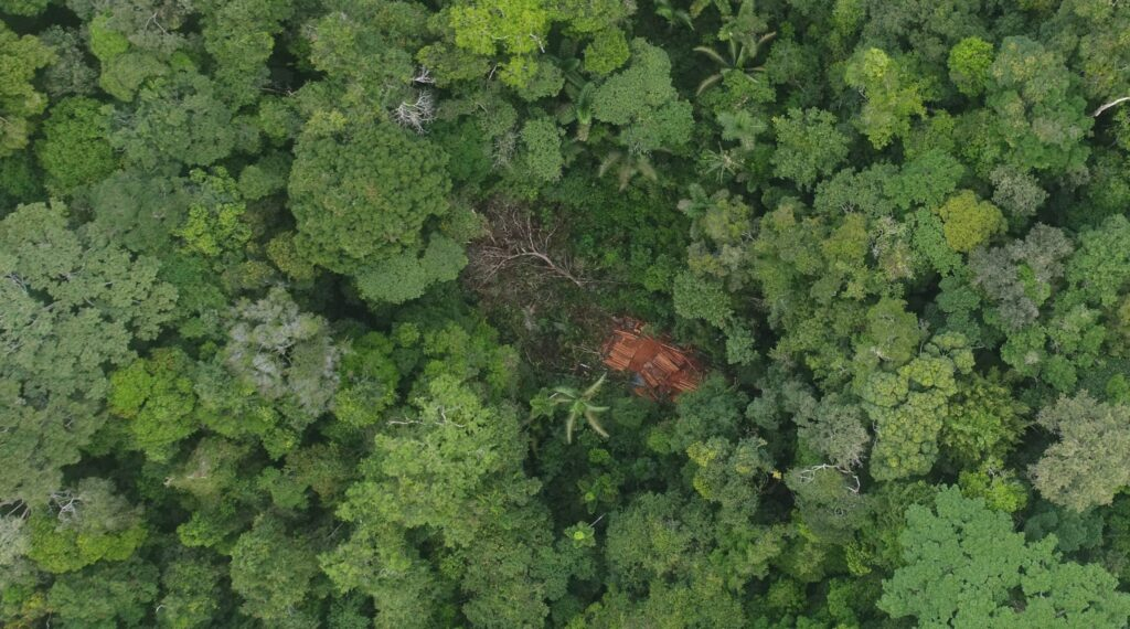 """Case B. Illegal logging in the """"MADEFOL"""" forestry concession identified with drone overflight. Source: ACCA."""