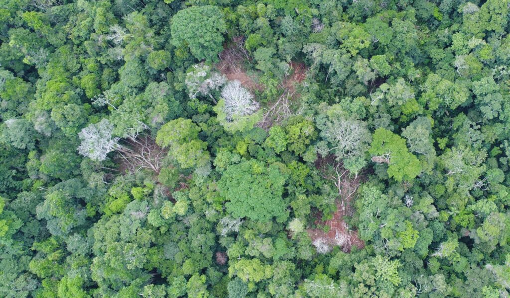 Case A. Illegal logging in the Los Amigos Conservation Concession, identified with drone overflight. Source: ACCA.
