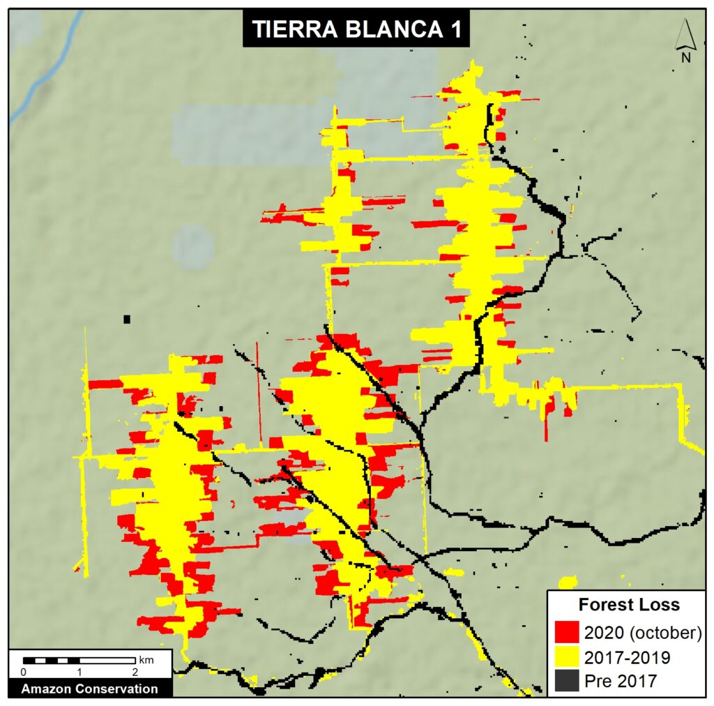 Time series of satellite images ranging from 1985 to 2020 that shows that the major deforestation in the area began with the Mennonite intervention.
