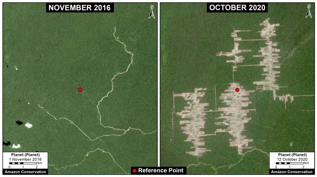 Deforestation between September 2016 (left panel) and October 2020 (right panel), associated with the Mennonite colony Tierra Blanca 1. Data: Planet, MAAP. Click to enlarge.