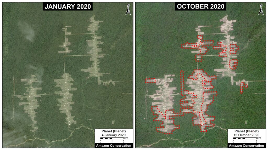 Deforestation between January 2020 (left panel) and October 2020 (right panel), associated with the Mennonite colony Tierra Blanca 1. Data: Planet, MAAP. Click to enlarge.