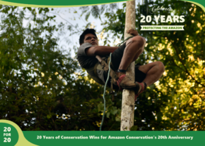 Acai harness as a part of the sustainable forest products program by Amazon Conservation,part of 20 for 20 Years of Conservation Wins by Amazon Conservation