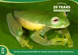 Photo of Glass Frog Discovered At Wayqecha by Amazon Conservation,part of 20 for 20 Years of Conservation Wins by Amazon Conservation