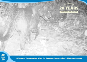 Melanistic jaguar as part of 20 for 20 Years of Conservation Wins by Amazon Conservation