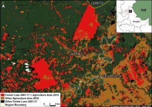 Zoom C. Oil palm deforestation (Ucayali region). Data: MAAP, MIDAGRI, MINAM/Geobosques.